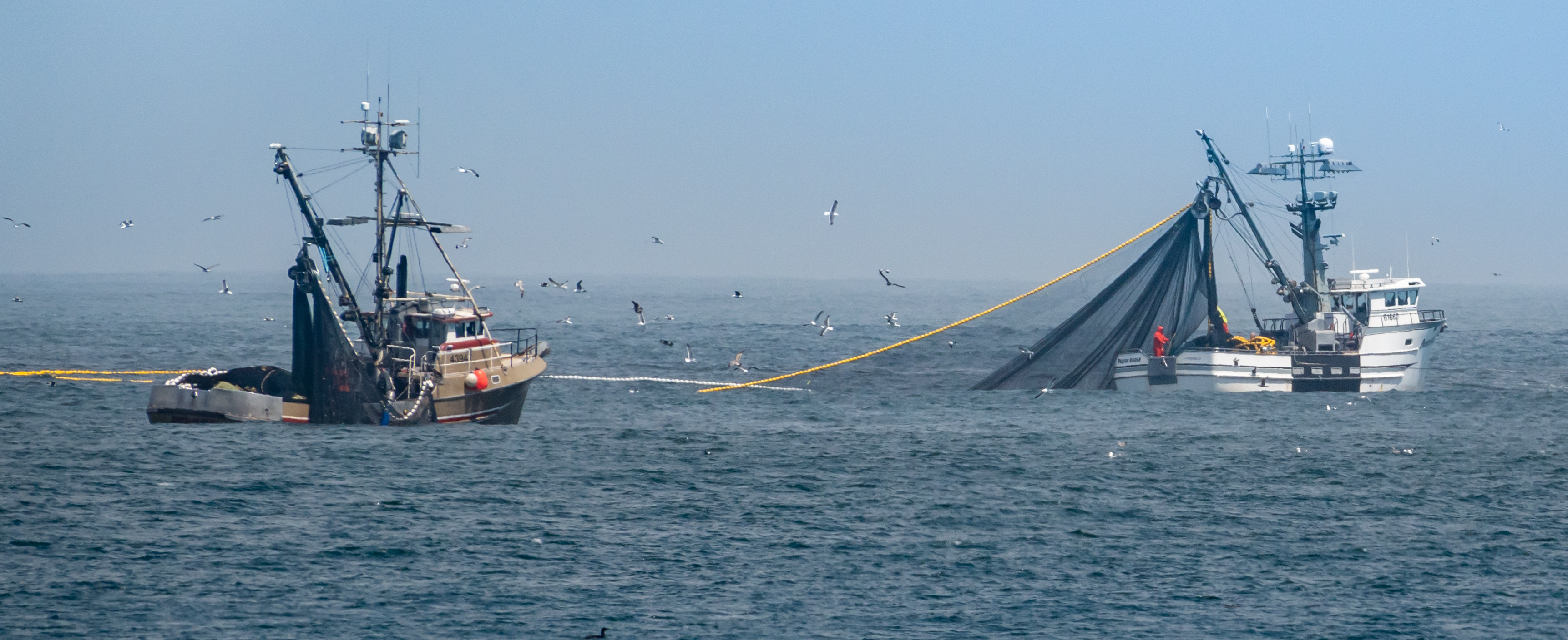 A vessel with a net to catch coastal pelagic species