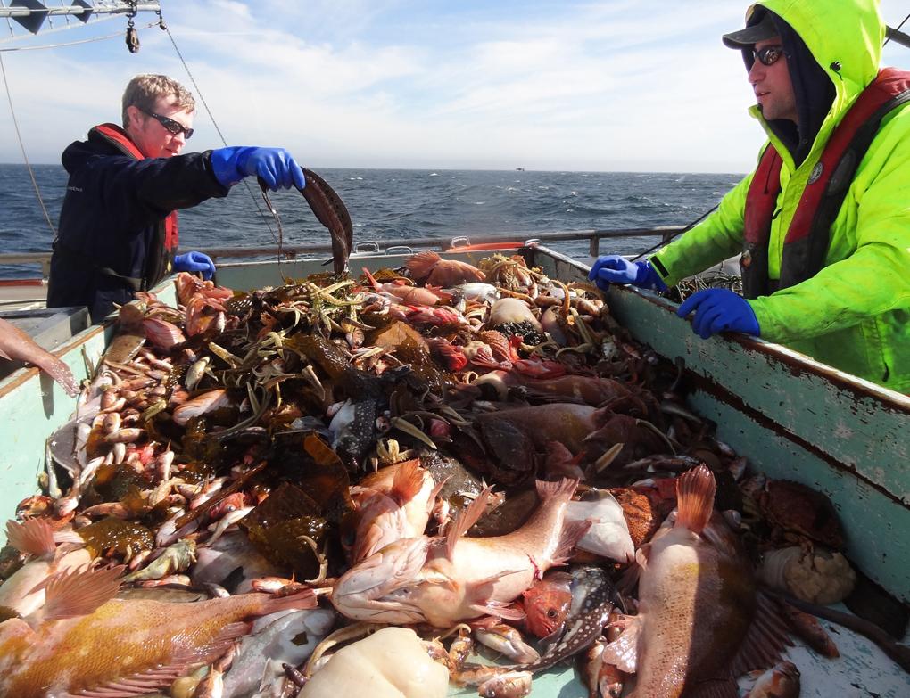 Sorting fish on a NOAA groundfish survey