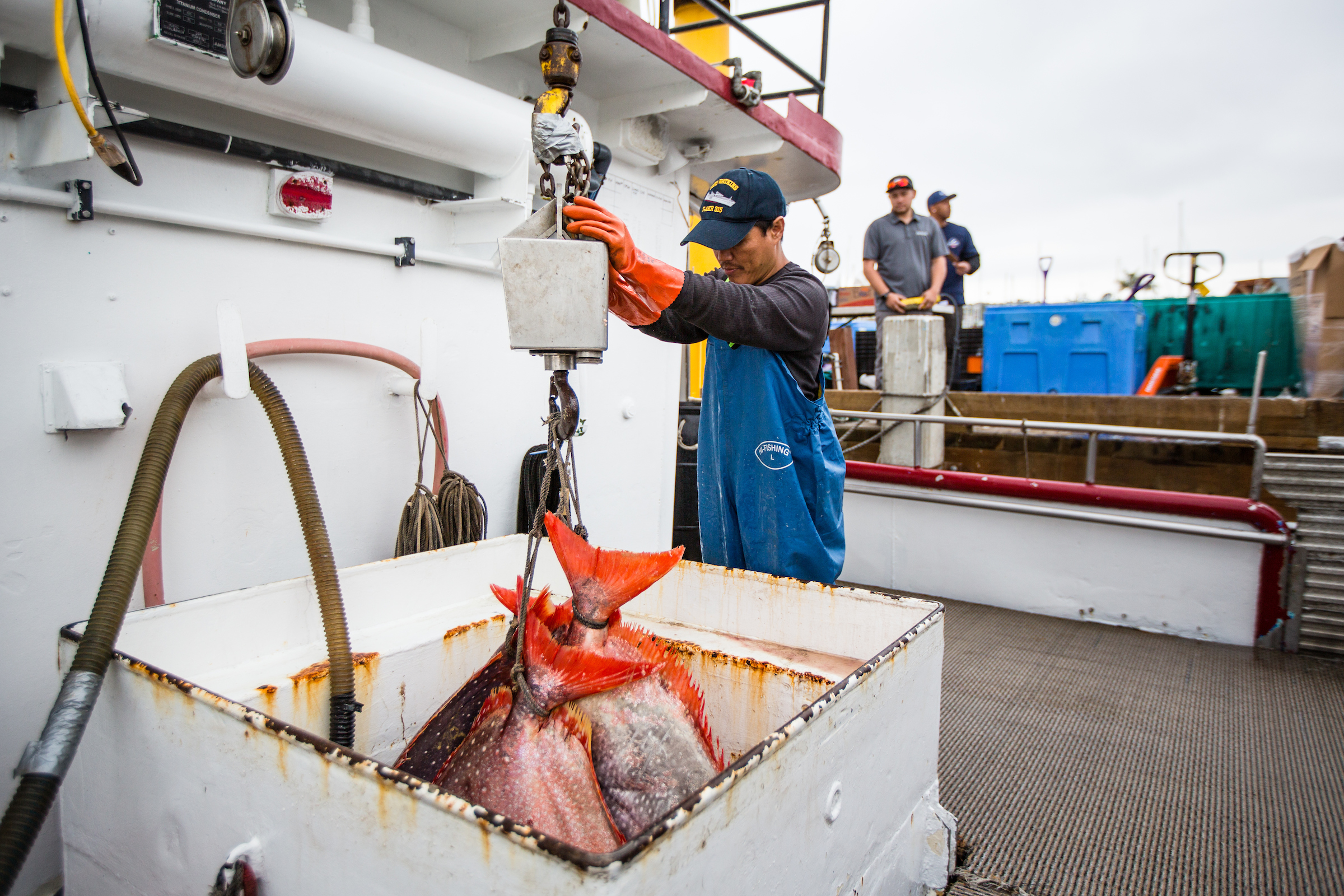 A man in blue coveralls weighs fish on the back of a boat