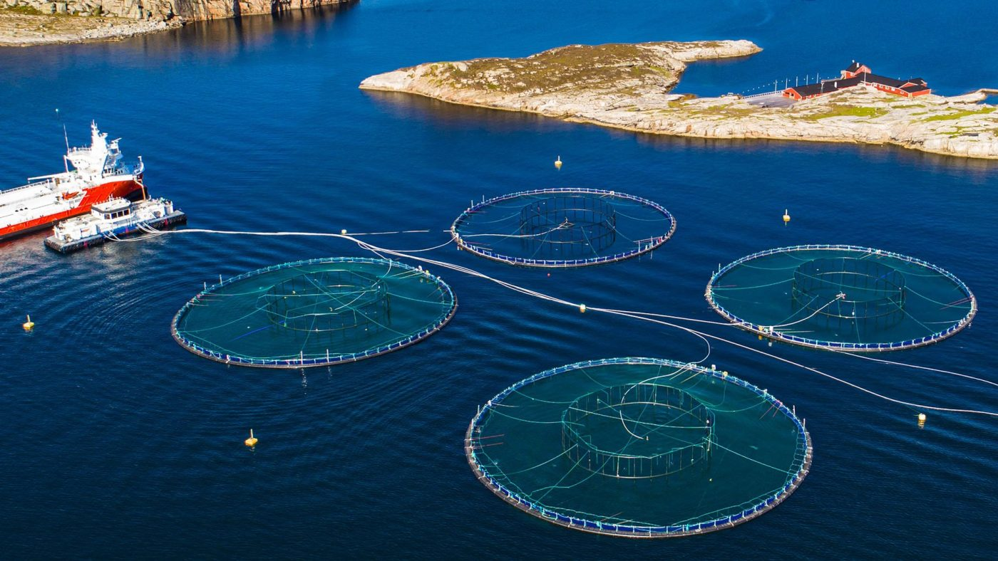 Four circular floating nets used for aquaculture in the ocean
