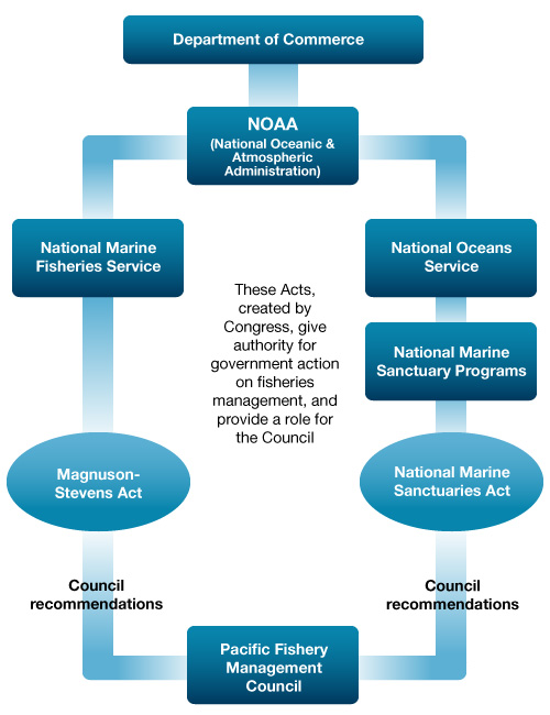 Flow chart showing marine protected area designation process