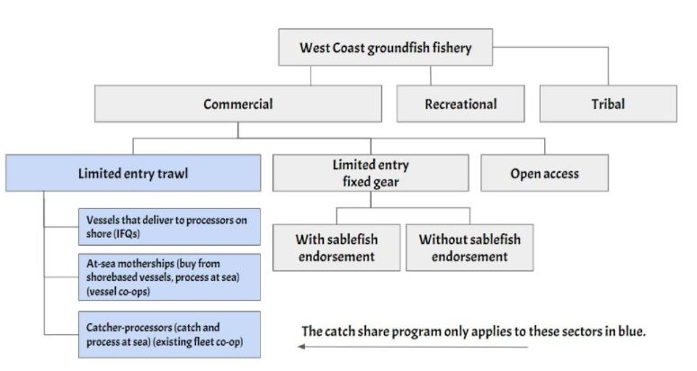 A flow chart showing the sectors of the trawl fishery.